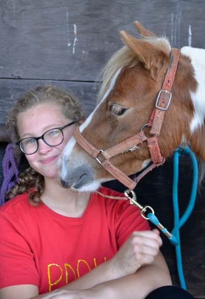 Miniature Horse Demonstrations
